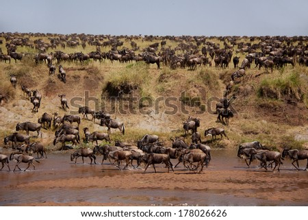 Great Migration #178026626