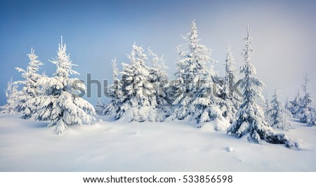 Stock Photo Great morning view of mountain forest after heavy snowfall. Misty winter landscape in the snowy wood, Happy New Year celebration concept. Artistic style post processed photo.
