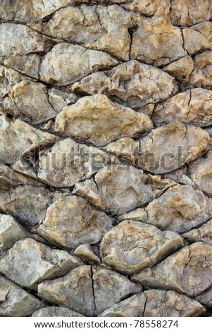 great palm tree texture #78558274