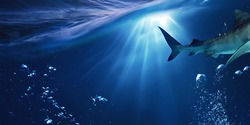 Great shark. Bubbles in the water. Undersea world . Rays of light