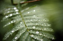 Great shot for environmental concept. Drops after the rain in the forest