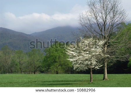 Great Smoky Mountains National Park Cades Cove Scenic Horizontal