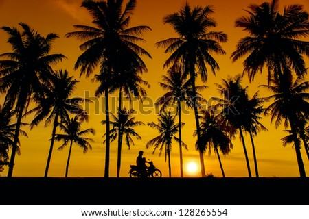 great sunset and coconut tree silhouette