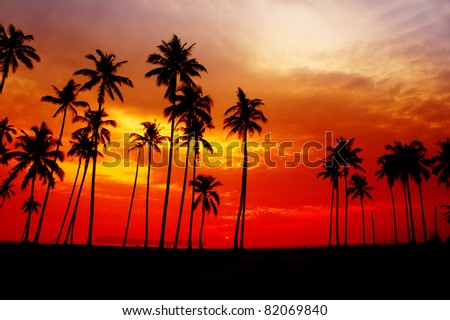 great sunset with silhouette coconut tree
