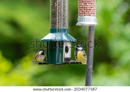 Great tit and coaltit, periparus ater, perched on a bird feeder Сток-фото ©