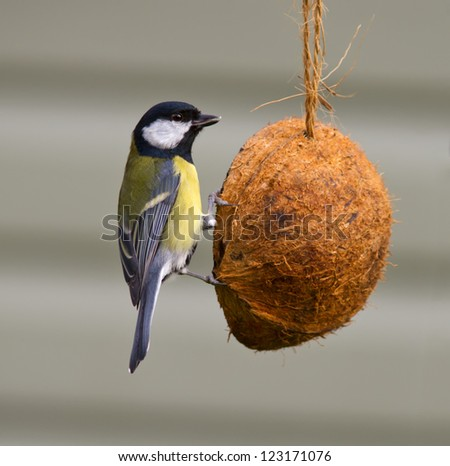 Great Tit on a feeder