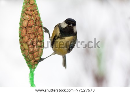 Great tit on a sack of nuts - stock photo