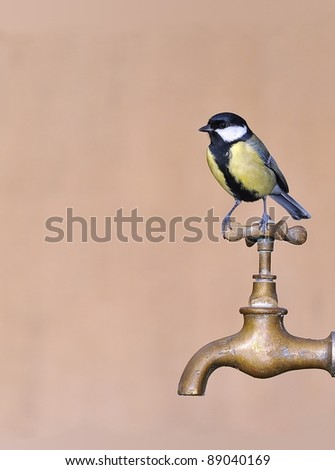 Great tit perched on a tap