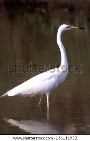 great white egret heron animals birds with wings wild birds abnormal world