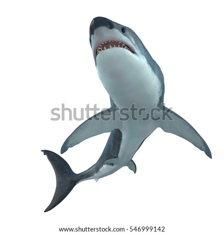 Shutterstock Great White Shark Cruising 3D illustration - The Great White Shark is the largest predatory shark in the ocean and can grow to 26 feet and can live for 70 years.