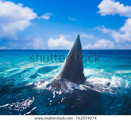 Great white shark fin above water  Foto stock ©