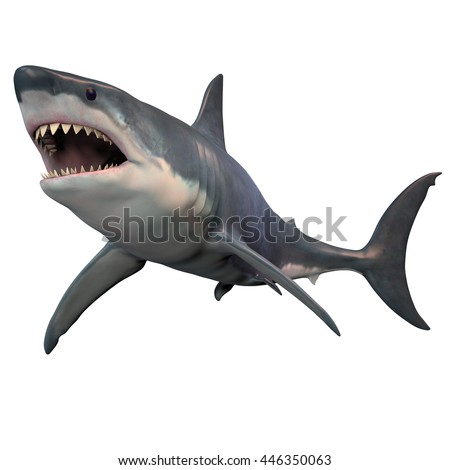 Shutterstock Great White Shark Isolated 3D Illustration - The Great White shark can grow over 8 meters or 26 feet and live to 70 years of age.