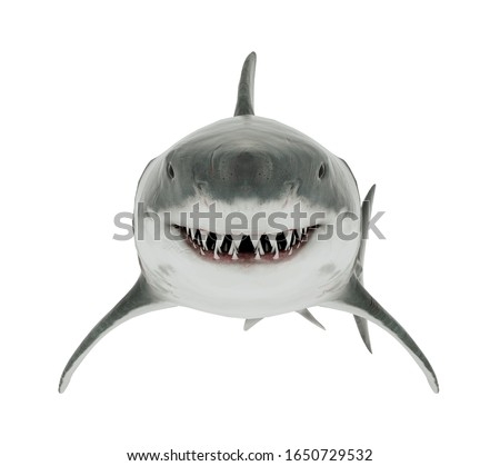 Great White Shark Isolated. Front angle 3D Rendering Foto d'archivio ©