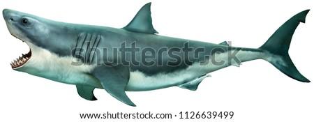 Great white shark side view 3D illustration