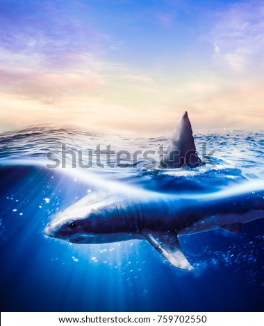 Great white shark swimming underwater with light rays / 3d illustration / mixed media