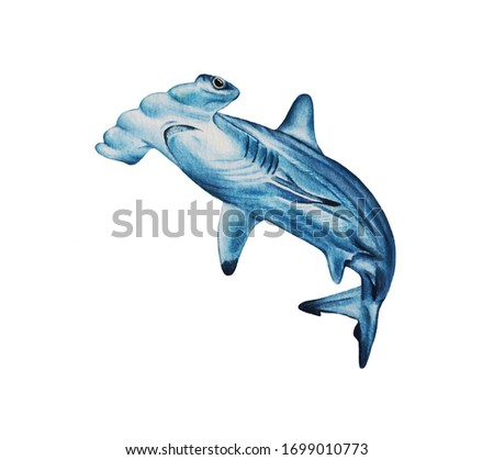 Great wild shark, hand drawn animals on a white background. Watercolor illustration. Design for children's clothing, cards, excellent quality for decor, tattoos and more.