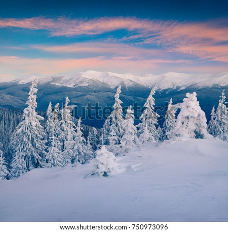 Great winter sunrise in Carpathian mountains with snow covered fir trees. Colorful outdoor scene, Happy New Year celebration concept. Artistic style post processed photo.
