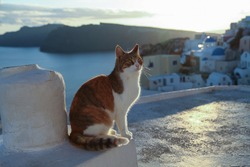 Greece, Santorini. Red cat sitting on the wall near the sea.