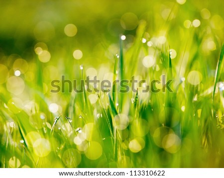 Greed grass in a dew. Close up shot with selective focus and beautiful natural bokeh