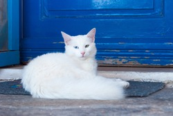 Greek cats - beautiful white cat sitting on the entrance to the house