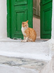 Greek males - beautiful cat sitting on the stairs at the entrance to the house
