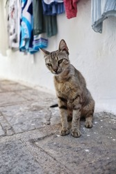 Greek Young Cat in Lindos Street. Beautiful Feral Animal in Greece. Adorable Stray Kitten in Rhodes.