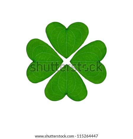 greem four-leaf clover, an good luck charm on a white background