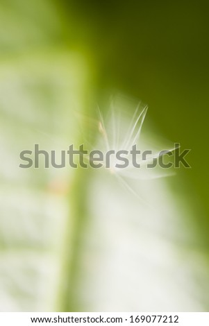 Green abstract with leaf texture and dandelion seed