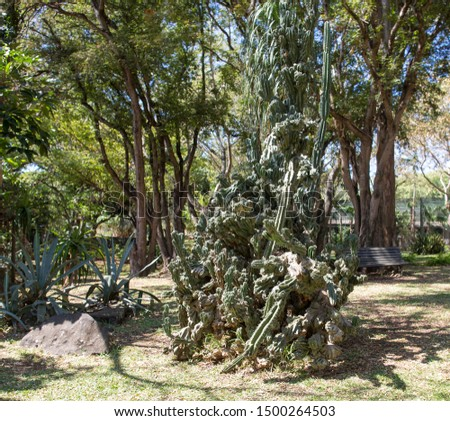 green african trees and vegetation in Mauritius