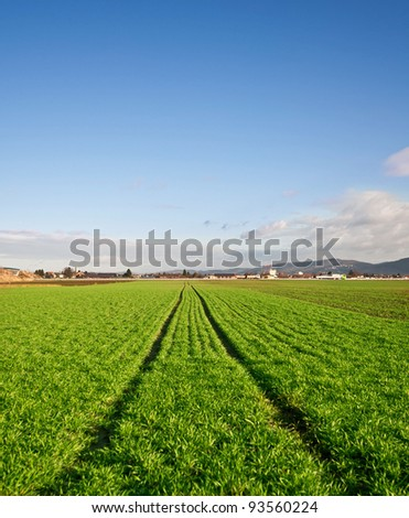 Green agricultural field with tracks of a tractor
