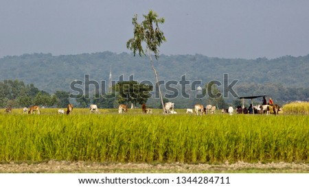 Green Agriculture Field