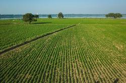 Green agriculture field near Taung Tha Man Lake at Amarapura, Mandalay, Myanmar
