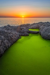 Green algae and sunset, Beautiful pond and green algae. Green algae with sunlight shine.
