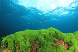 Green Algae Blue Sea Water