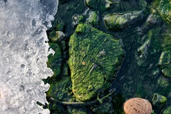 Green algae covered boulders at sea coast beach. Background and surface texture. Sea algae or Green moss stuck on stone. Rocks covered with green seaweed in ocean water.