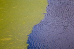 green algae floating on rippled water surface of the pond with pronounced border between duckweed and exposed water surface
