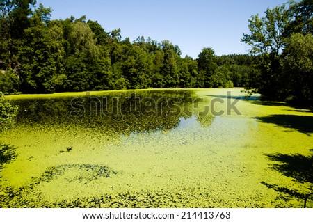 Green Algae Lake