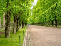 Green alley with beautiful  trees in the park. Beautiful road in the middle of trees at the country side in nation park. Image For desktop, wallpapers, banner. Copy space, text box.