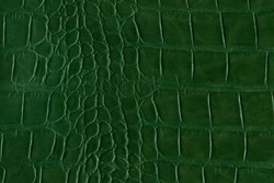 Green alligator or reptile skin of high quality and high resolution. Texture and background of crocodile or alligator dark green skin in square pattern for wallets, purse, bags and interior design.