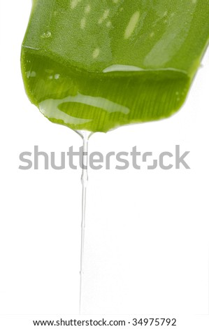 Green aloe leaf with juice droplet