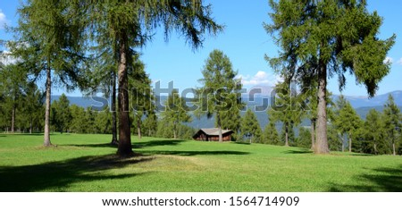 Green alpine meadows with alpine hut and larch - rural idyll in South Tyrol #1564714909