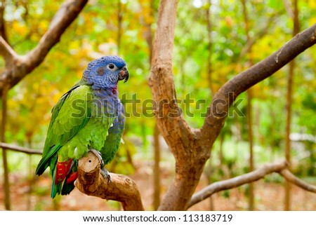 Green and blue parrot inthe wild