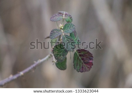 Green and claret leaves #1333623044