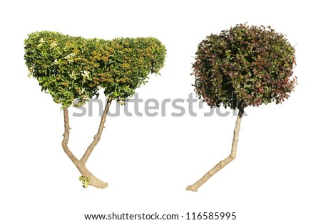 Green and dark purple trees isolated on white. Decorative trees - stock photo