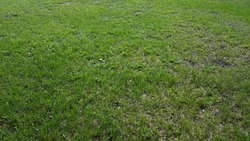 Green and Grassy Lawn Background