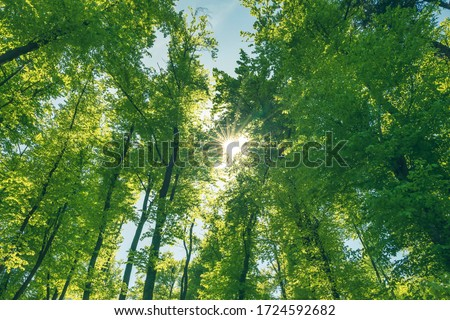 Green and healthy forest an important part of our ecosystem. Afforestation for better future. Stock foto ©