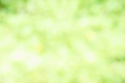 green and light green blur background
