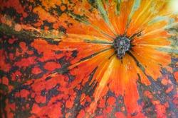Green and orange pumpkin. Vegetable peel texture. Ripe squash closeup photo. Autumn season background.a close up of a bright orange pumpkin showing stem. Close up of pumpkin texture background
