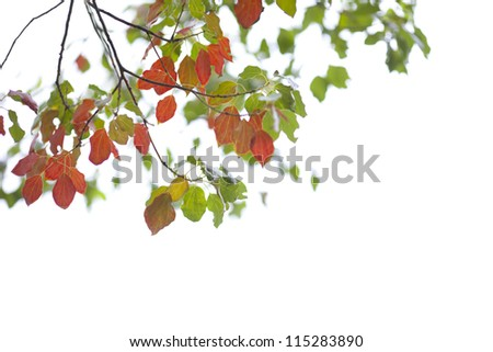 green and red leaves in the autumn season