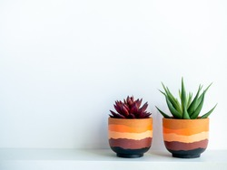 Green and red succulent plants in modern painted terracotta pot on white wood shelf isolated on white wall background with copy space.